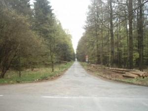 Die Paßhöhe im Bramwald, von der Verpflegungsstation aus zu sehen. Es folgt ein heißer Ritt abwärts auf recht schlechter Straße.